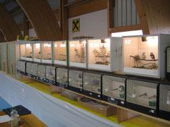 Reihe Wellensittiche und Prachtfinken