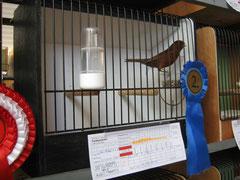 Schwarz rot kobalt intensiv 92 Pkt. Züchter: Sieberer