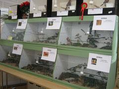 EinTeil der Schau Vögel aus 5 Kontinenten