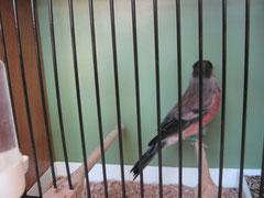 selbe Vogel Rückenansicht