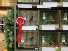 Sieger Grünfinken 370 Pkt. von ZG Bernhard-Scherbichler