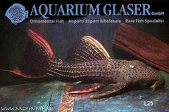Aquarium Glaser, июнь Image