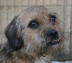 Miserio wurde von seiner Pflegefamilie adoptiert.