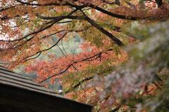 本堂周囲の紅葉の様子です