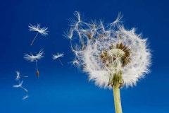 Jetzt schon für das Allergiejahr vorbeugen!