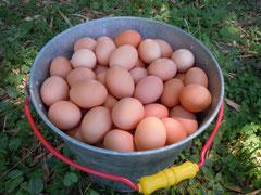 生みたての自然卵
