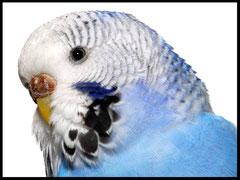 Vogelfutter, Zubehör, Eifutter