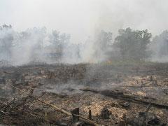泥炭湿地からの発火続くカリマンタン