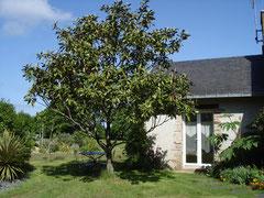 Chambre Magnolia