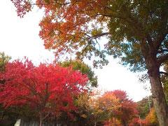 11.08 自転車で走り抜けた平和公園の並木。紅葉がきれいでしばし立ち止まりました。