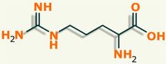 Arginina aminoácido