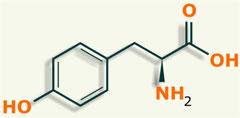 Tirosina aminoácido