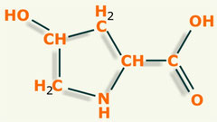 Hidroxiprolina aminoácido