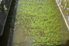 canal désaffecté envahi par la végétation