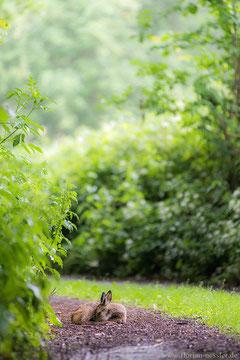 Rehkitz aufgenommen mit dem Nikon 80-200 f/2.8