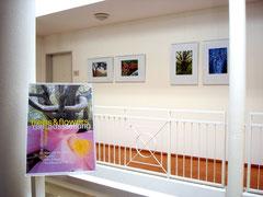 Ausstellung «Trees & Flowers», Villa Saleggi, Hapimag, Ascona, Schweiz, 2013