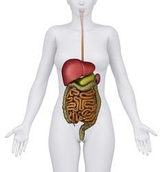 der Darm, Immunorgan