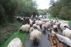 bifurcation forestière vers le Bois de Madame
