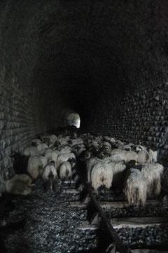 D'ailleurs on voit le bout du tunnel où bêtes et accompagnants vont dormir dans un certain courant d'air... sous les voutes bien conservées de ce magnifique ouvrage d'art datant de 1911.