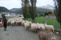 Lées, village niché sur la rive gauche du Vallon