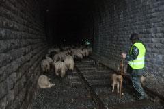 Marc, le berger, n'aura aucune difficulté à garer tout son troupeau au sec pour la nuit...