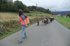 Le cortège repart, difficile parfois pour Mireille de motiver les chèvres à avancer...