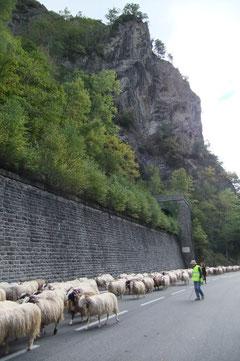 La montagne sait encore dominer train et route.
