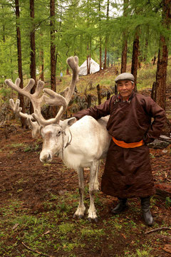 Vieux Tsaatan et son renne