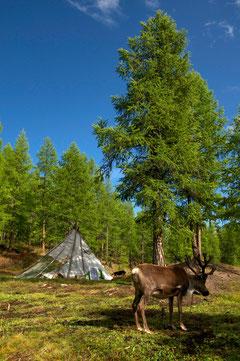Camp Tsataan