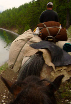 Cheval de bât rive lac Khovsgol (Khuvsgul)