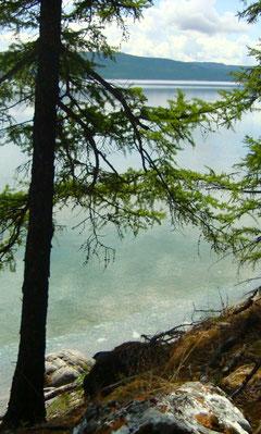 Les rives du lac Khovsgol en Mongolie