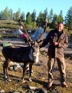 Avec les rennes des Tsaatan