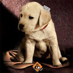 Trafficanti di cuccioli