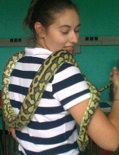 manipulation de reptile