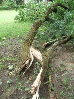 先日の雹の爪痕が残る公園。続きを読むをクリック!