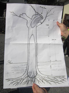 樹幹空洞の推定図