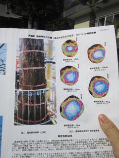 樹幹空洞の断面図