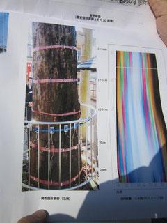樹幹の空洞の測定結果