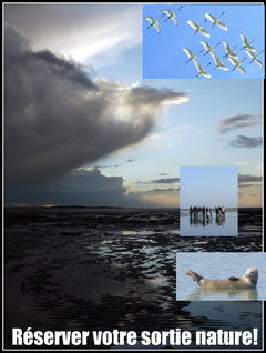 Réservation sorties nature avec un guide en Baie de Somme, traversée de la baie de somme, découverte des phoques....