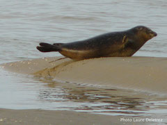 Pensez à réserver votre balade nature découverte des phoques en Baie de Somme©Découvrons la Baie de Somme