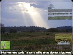 Découvrir les oiseaux en basse vallée de la somme©Découvrons la Baie de Somme