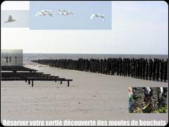 Découverte des moules de bouchots©Découvrons la Baie de Somme
