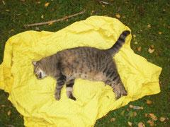 Eine tote Katze auf einem gelben Tuch auf einer Wiese