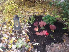 Frisch gepflanzte Blumen, daneben mit Laub bedeckte Erde und eine Laterne mit Kerze.