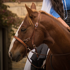 Why bit-less is safer for horse riders - FairHorsemanship