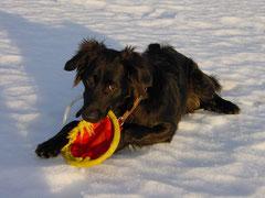 """""""Play with me"""" - mein erstes Foto auf Flickr"""