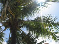 ハワイ オアフ島 アウラニディズニー ホテル建物 プール