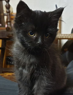 "This is Odi when she was thought to be a ""he"". She is now known as Princess Odessa (Odi for a nickname.)"