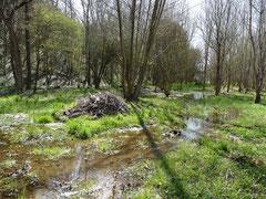 Zones humides boisée dans la vallée du Couzeau