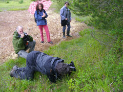Fotoshooting für die Bienen-Ragwurz